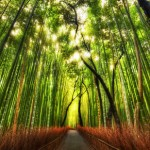 10 Amazing Facts About Bamboo