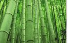 Sustainable Properties of Bamboo