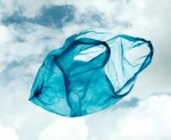 Windham Weighs Bag Ban