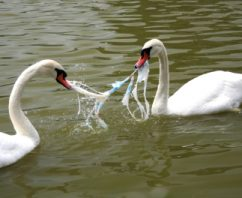 How Plastic Bags Impact Animals and Other Wildlife