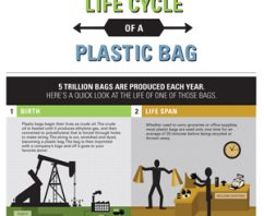 Reusable Grocery Bags? Infographic Shows It's Time to Make The Switch