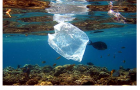 Plastic Pollution and the Impact on the Food Chain