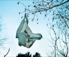 Why Do Single Use Plastic Bag Bans Fail?