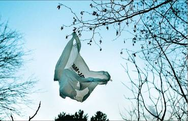 Plastic Bag in Tree