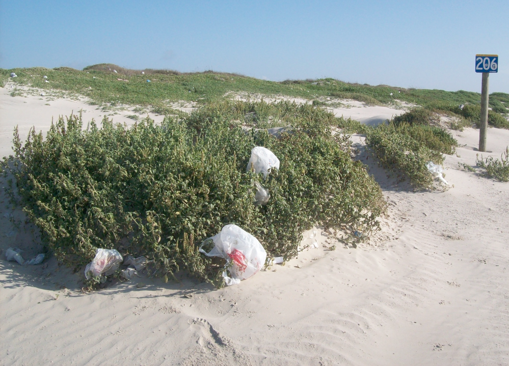 This one law can have a trickledown effect that will benefit the people of the state in so many ways. A law that regulates the use of disposable bags for an entire state can have a huge impact on the amount of discarded bags that pollute oceans, beaches, neighborhoods, and harm wildlife and their habitats.