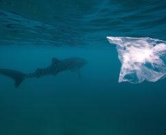 Love Shark Week? Why Disposable Bags and Sharks Don't Mix