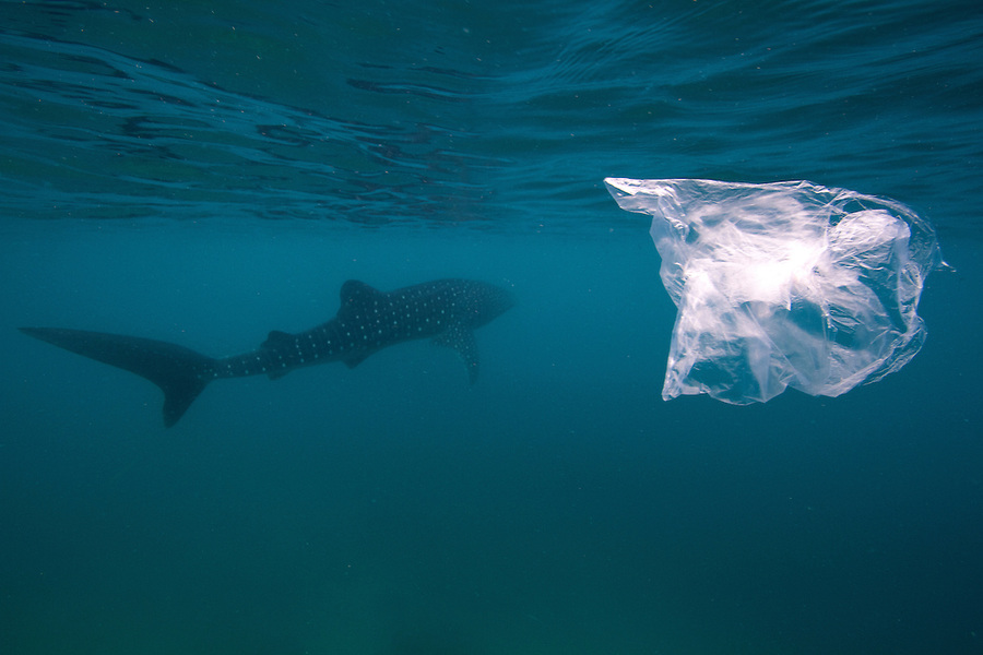 Plastic bags are bad for sharks