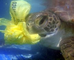 Plastic Pollution Strikes Again Killing Rare Sea Turtles