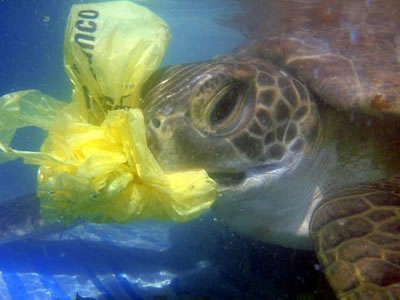 Sea turtle eats plastic
