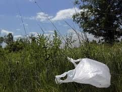 How Do Single Use Plastic Bags Harm the Environment?