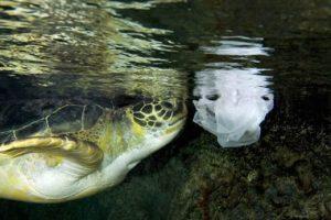 sea turtle_bag