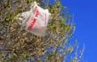 Single Use Plastic Bags Banned In the U.S.