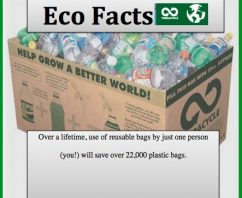 5 Eco Facts That Will Blow Your Mind
