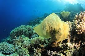 Plastic Ocean Litter