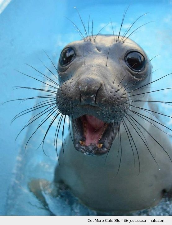 cute-animals-happy-smiling-sea-lion-seal-whiskers-pics