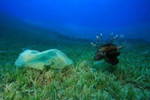 Is Our Food Chain Feeding Us Plastic Bags?