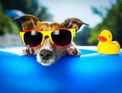 3 Cool Ideas for Summer Marketing