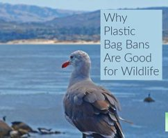 Why Plastic Bag Bans Are Good for Wildlife