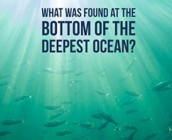 Guess What Was Found at the Bottom of The World's Deepest Ocean?
